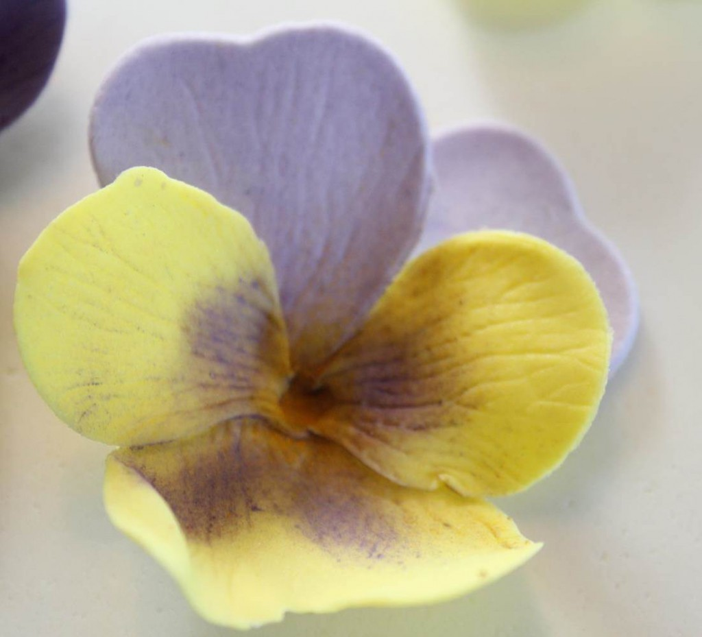 Pansy19