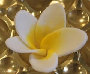 Sådan laver du frangipani blomster