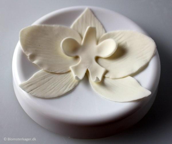 orkide22