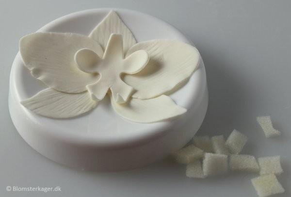 orkide23