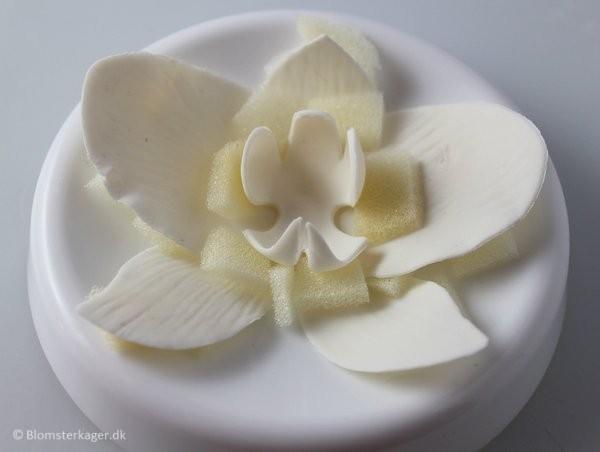 orkide24