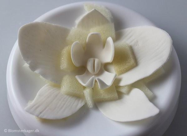 orkide28