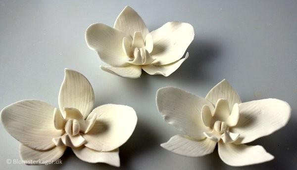 orkide29