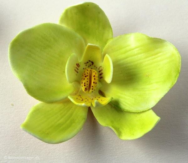 orkide31