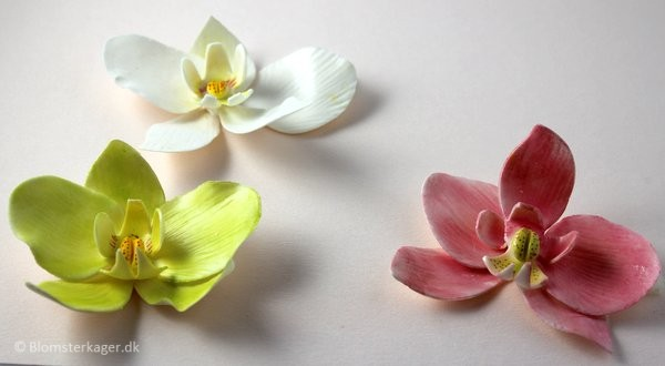 orkide32